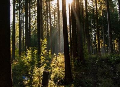 Erholung im Erzgebirge